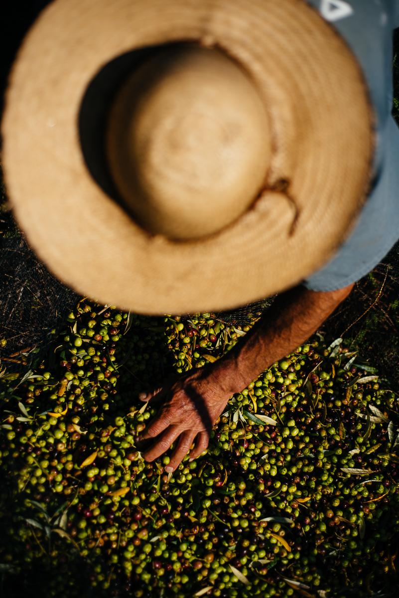 Produção de Azeite